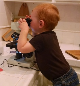 A future microbiologist (?) taking a his first look through a microscope.
