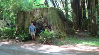 Dave standing by the stump of a redwood.