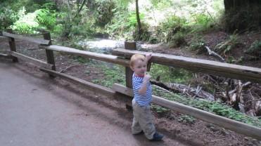Alex enjoying Redwood Creek.