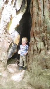 Alex checking out a hollow in a tree.