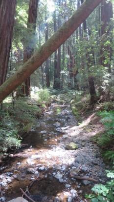Redwood Creek, taken from a foot bridge.