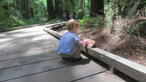 Alex inspecting the signs in Muir Woods.