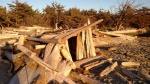 Driftwood shelter at Cape Disappointment, Washington.